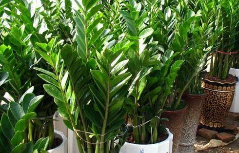 使用植物净化室内环境要禁忌哪几点?
